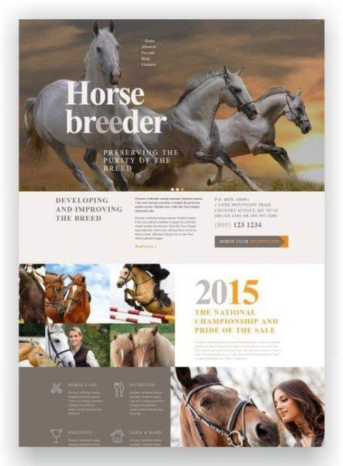 WordPress Webseite für Pferdezüchter