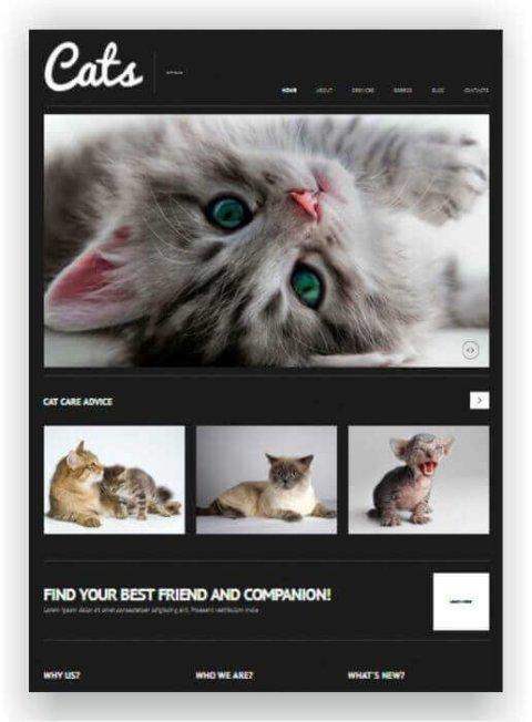 WordPress tema de gatos