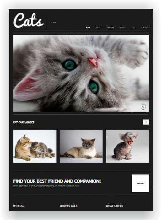 Katzenwebseite